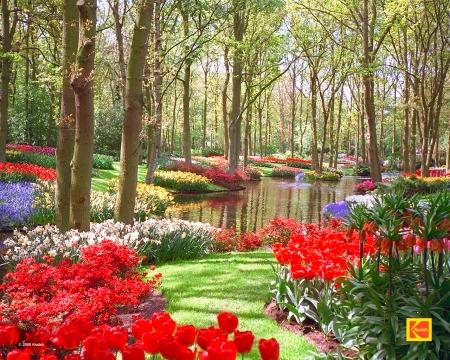 Pasi virágoskertje